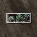 Kit Autocultivo La Casa de las Micro Plantas de Rábano